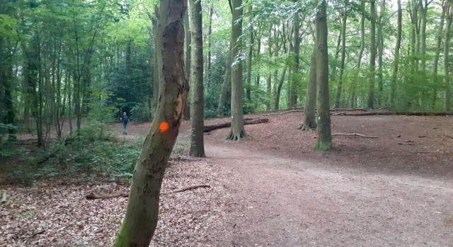 Oranje stippen op bomen in het Haagse Bos - Boswachter Sandra Knop