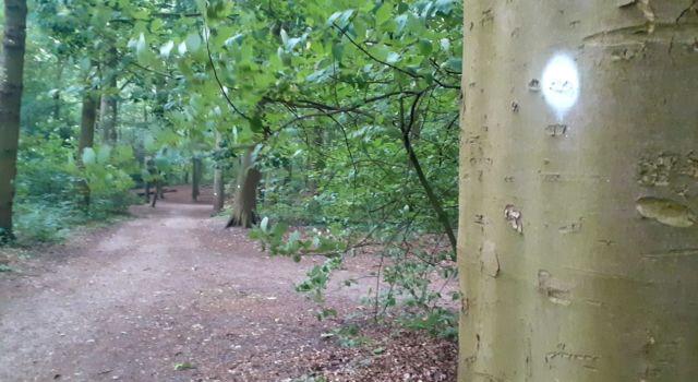 Witte stippen op bomen in het Haagse Bos - Boswachter Sandra Knop
