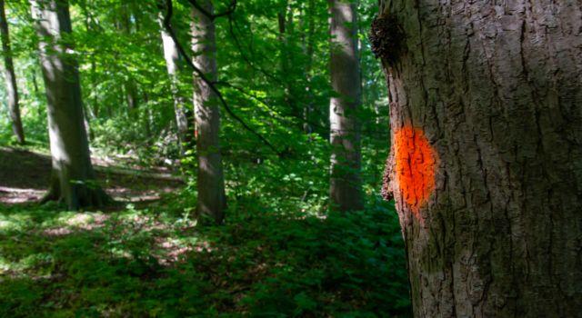 Blessen voor een toekomstbestendig en soortenrijk Haagse Bos - foto Mark Kras