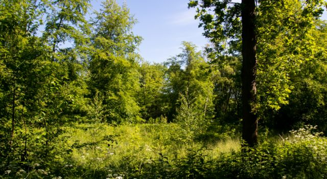 Jonge aanplant waar bomen zijn geweken voor een meer divers bos. Foto Mark Kras